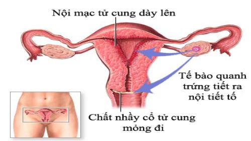 Nội mạc tử cung dày lên là gì